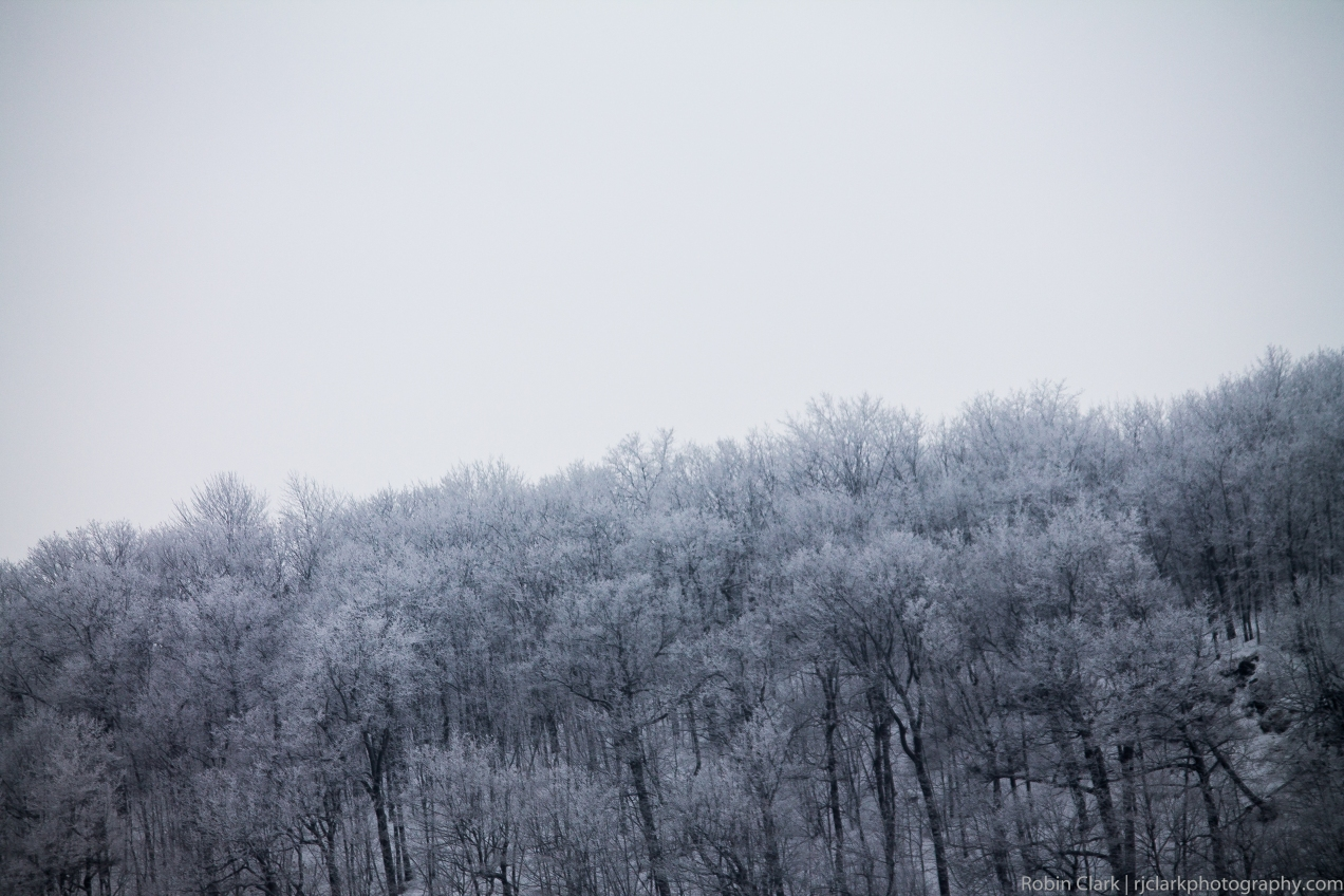 Winter's Forest